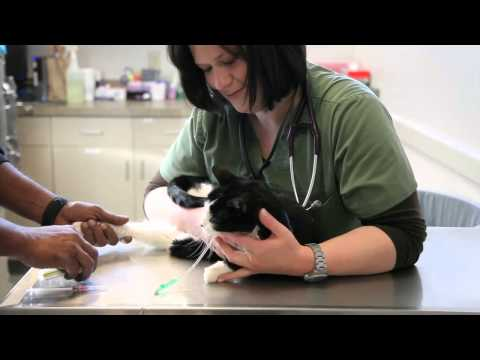 Welcome to the Veterinary Specialty & Emergency Center