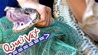 RÙNG MÌNH khi đi thăm lú (12 cửa ngục) gặp QUÁI VẬT giữa ban ngày | Fishing