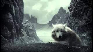 Видео про животных #3 (волки)