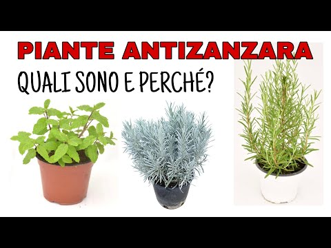 Conosciamo le Begoniaceae from YouTube · Duration:  18 minutes 20 seconds
