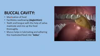 I PUC | BIOLOGY | Digestion and absorption- 2