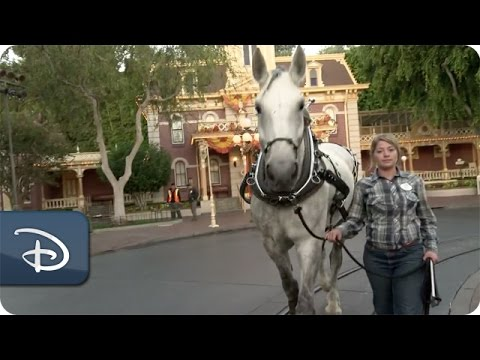 The Horses of the Circle D Ranch | Duke Prepares for Disneyland Debut Part One