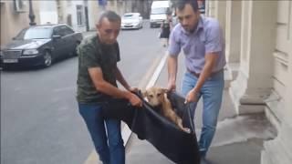 Спасение собаки, которую сбила машина.