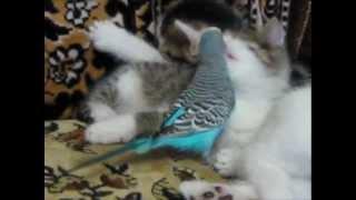Попугай и котята (Parrot and kittens)