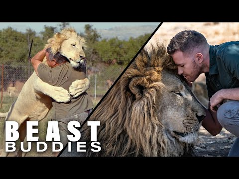 The Men Who Cuddle Lions I Beast Buddies Special