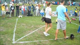 2013 Wiener Dog Race Pet Parade