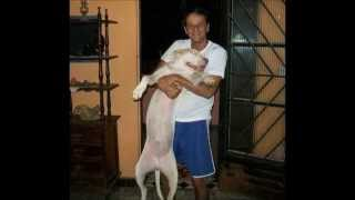 happy end dog  -Wilson  Martins Coutinho