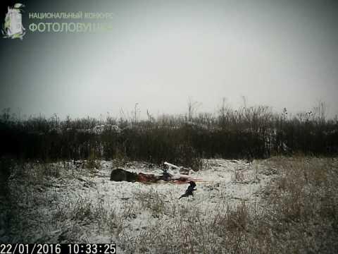 ID2171/Тимашевская РО ККОООР/Кот на приваде