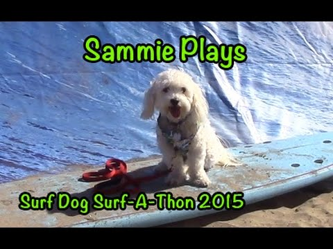 Surf Dog Surf-A-Thon 2015 SP #49