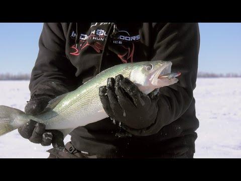 Lake Winnipeg Greenbacks - In-Depth Outdoors TV Season 11 Episode 16