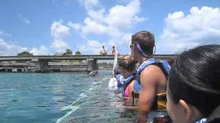 Dolphin and Manatee Interaction in Cozumel at Dolphin Discovery