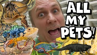 FEEDING ALL MY PET REPTILES!! THOUSANDS OF THEM! | BRIAN BARCZYK