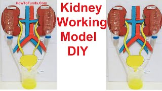 kidney working model making for science exhibition project | DIY at home | howtofunda