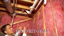 Roaches From the Basement - Atlanta pest control