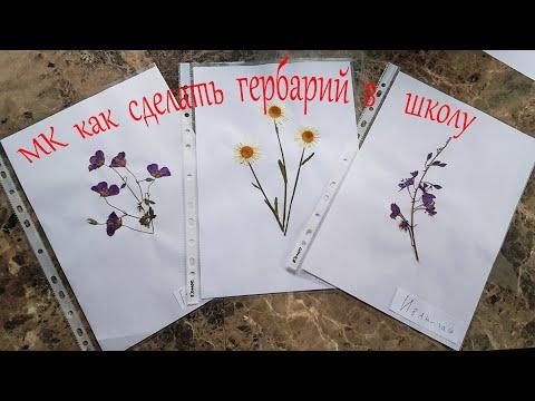 Как правильно сделать гербарий в школу