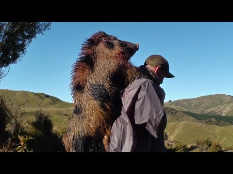 Hunting wild boar in New Zealand part 10