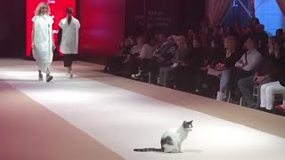 Actual cat walks down catwalk at fashion show