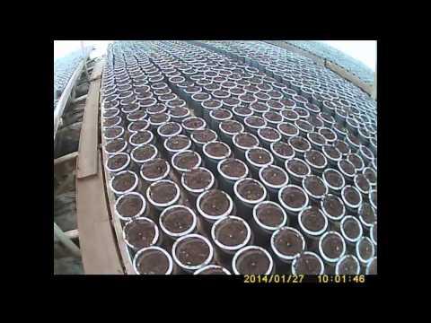 видео: как сажать и выращивать огурец   первые всходы 5 дней
