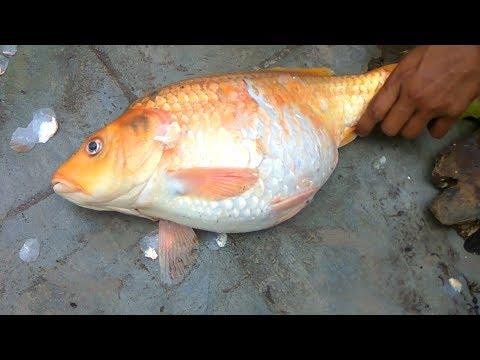 GRAVID GOLD FISH Curry Recipe | Village Survival Food