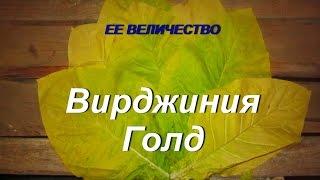 ДНЕВНИК ТАБАКОВОДА № 31 (14.07 О СОРТЕ ТАБАКА ВИРДЖИНИЯ ГОЛД )