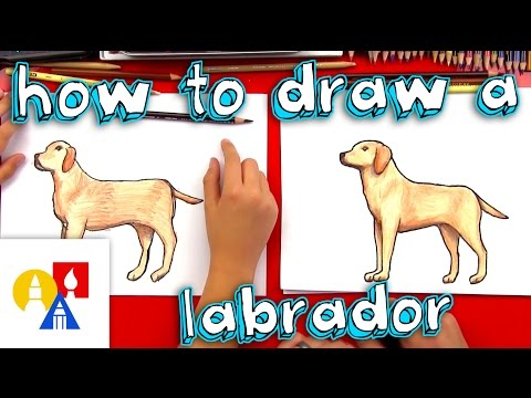 how-to-draw-a-yellow-labrador