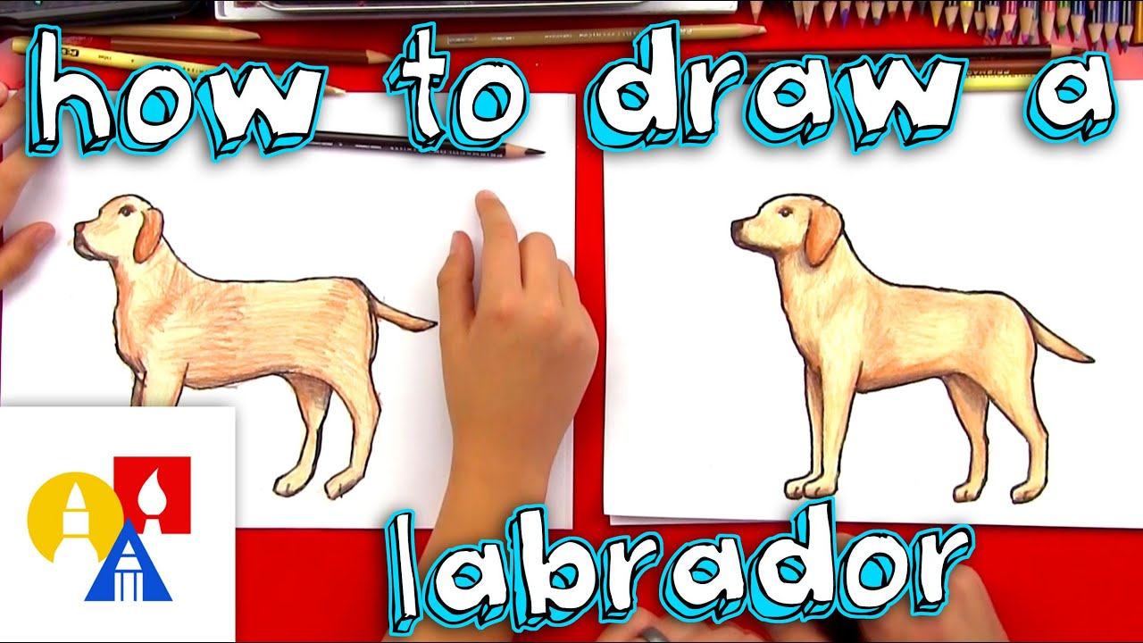 how to draw a yellow labrador youtube