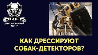 Как дрессировать собаку для поиска наркотиков запрещенных веществ?собаки детектор|искать взрывчатку