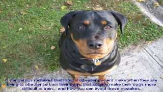 Rottweiler Dogs For Sale Price