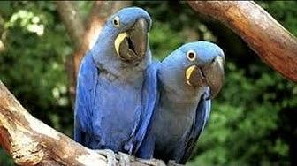 Exotische Vögel der Welt 1- Panasonic HC-V757