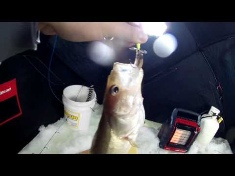 Red River Ice Fishing Walleyes   Feb 4 2017
