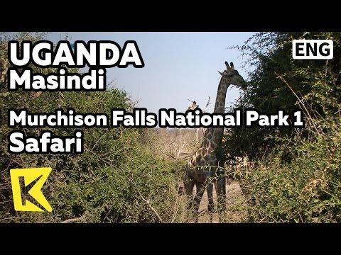 【K】Uganda Travel-Masindi[Uganda 여행-마신디]머치슨 폭포 국립공원 2 야생 사파리/Murchison Falls/National Park/Safari