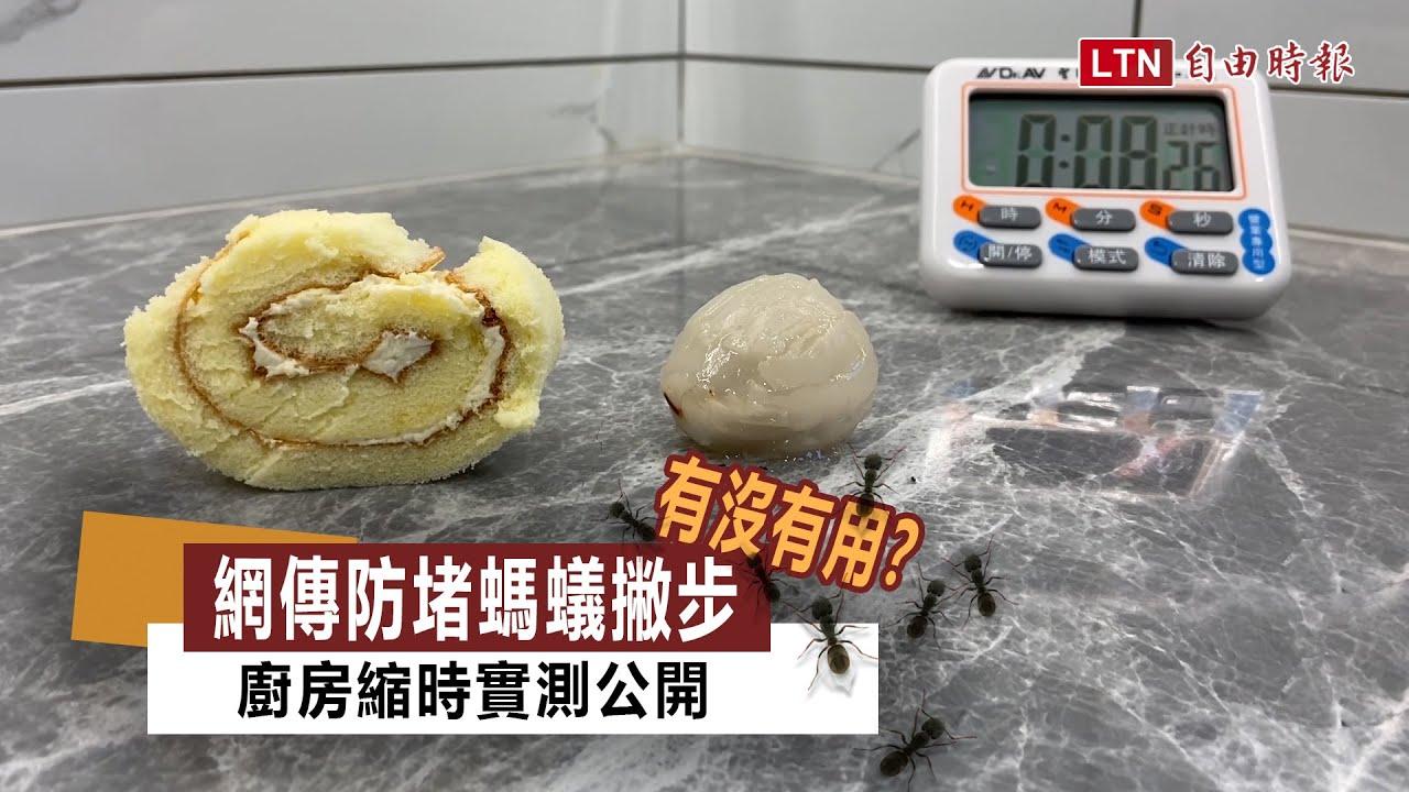 螞蟻愛蛋糕還是玉荷包?廚房縮時影片實測「網傳防蟻招」
