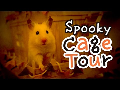 🕸 Ham-o-ween Cage Tour 👻 Halloween cage theme