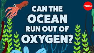 Can the ocean run out of oxygen? - Kate Slabosky
