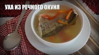 Уха из речного окуня — видео рецепт