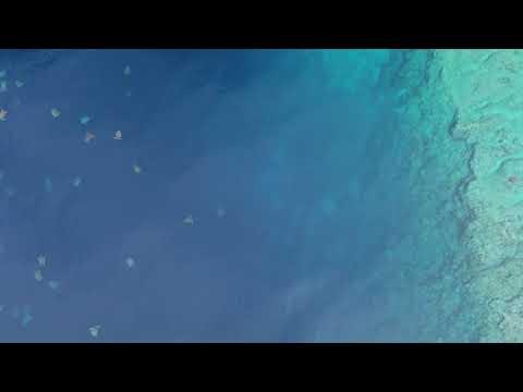Máis de 64.000 tartarugas chegan á illa Raine, Australia, para poñer os seus ovos