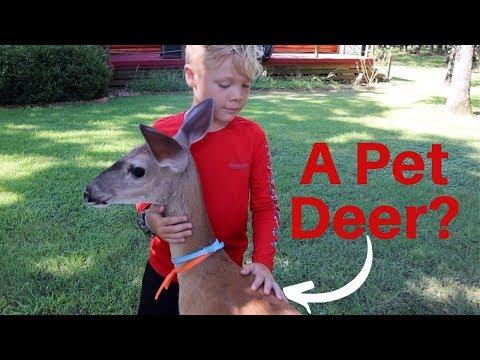 Everyone NEEDS a Pet DEER!