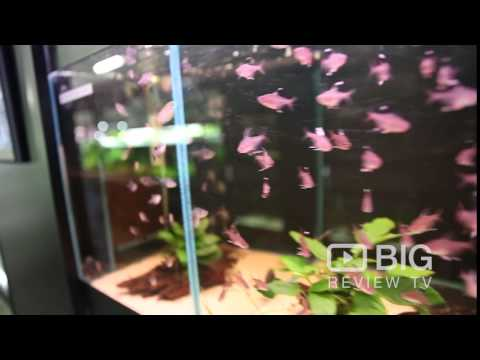 Subscape Aquarium Shop In Richmond VIC Selling Pet Fish And Aquarium