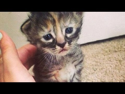 The World's Saddest Cat