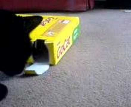 Cat Trick – Biscuit Time