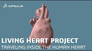 The Living Heart Project: Traveling Inside a Human Heart