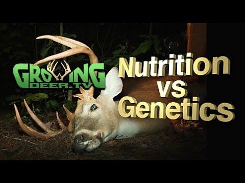 Whitetail Bucks: Antler Size And Genetics, Fact or Fiction? (#296) @GrowingDeer.tv