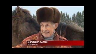 10 12 2015 Конезаводчик из Удмуртии много лет поддерживает старинную породу лошадей «Вятка»