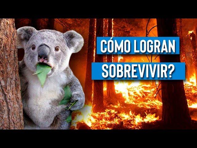 Que pasa con los animales en un incendio forestal?