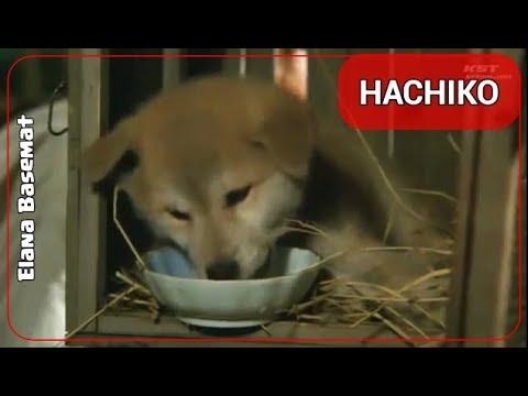 HACHIKO Monogatari 1987 Film {2/11}