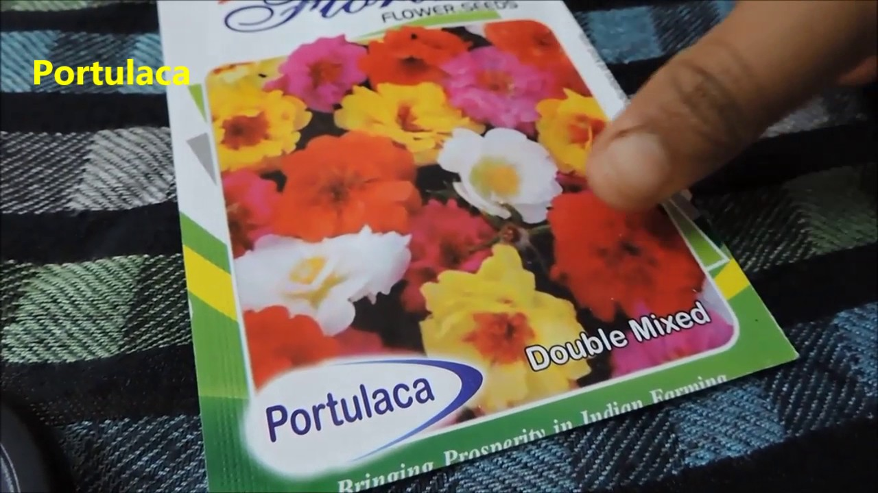List Of Summer Flower Seeds Spring Time Youtube