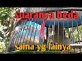 Perkutut Lokal Rawatan  Bulan Sudah Gacor Jinak Nurut Kowar Kowar Ekor Bondol Rusak Tetep Manggung  Mp3 - Mp4 Download