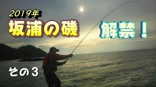 【島根の磯でフカセ釣り】いよいよ開幕!2019年坂浦の磯解禁!その3【日本海】