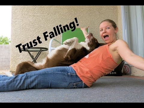 Teach Your Dog! Trust Fall