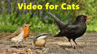 Videos for Cats to Watch  Birds From A Cats Perspective  8 HOURS of Cat TV